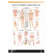 Плакат Мануальный лимфодренаж